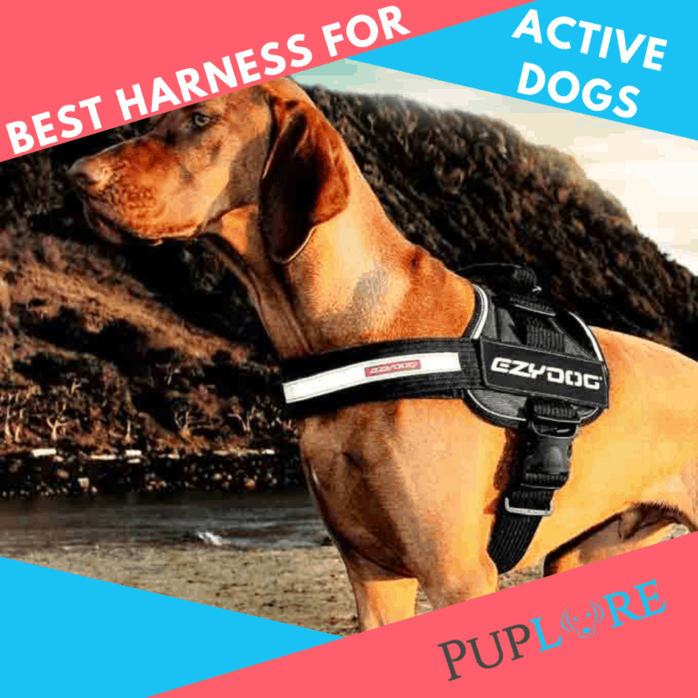 5 Best Dog Hiking Harnesses 2021: Gear for Your Active Dog