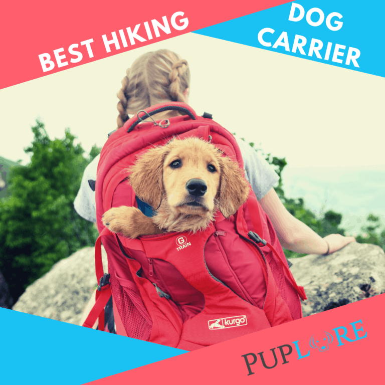 What is the Best Dog Carrier for Hiking? [5 Top Choices]
