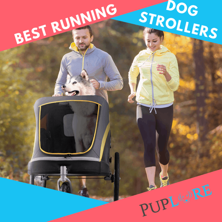What's the Best Dog Stroller for Jogging? [Top 5 for 2021]