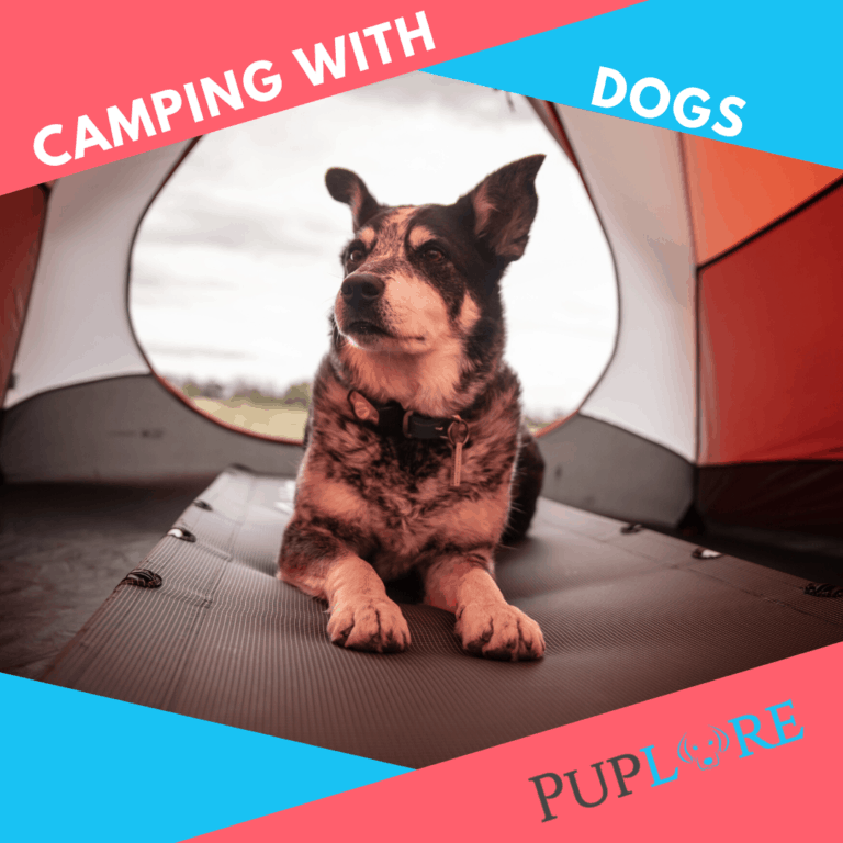 How To Camp With a Dog? Don't Leave Your Pup at Home!