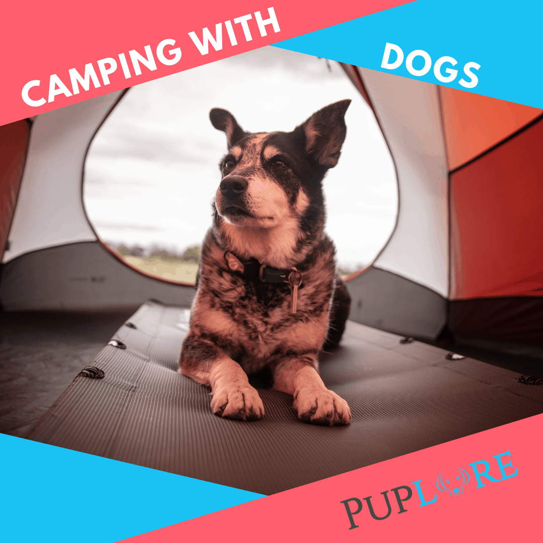 Camping With Dogs - Puplore