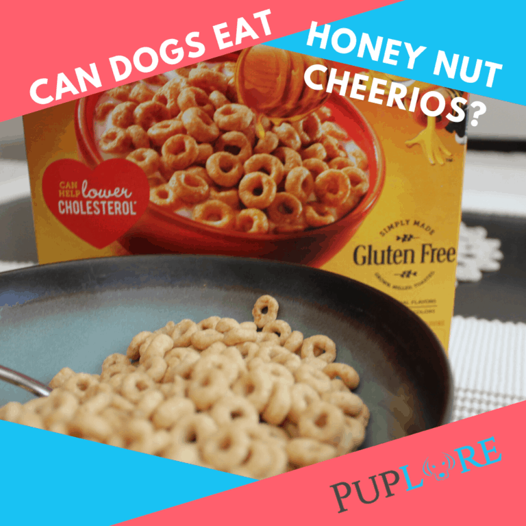 Can Dogs Eat Honey Nut Cheerios? They are a tasty snack!