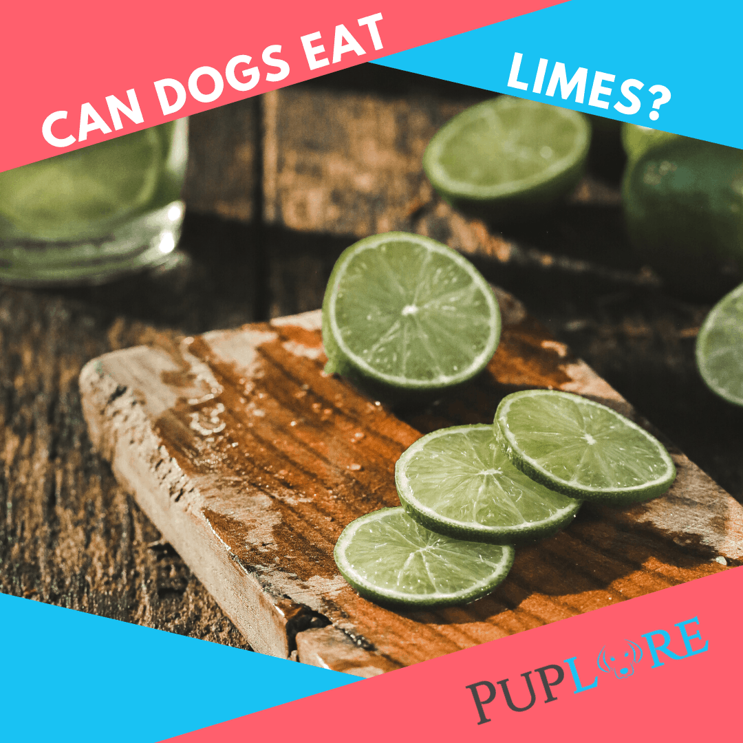 Can Dogs Have Limes? - Puplore