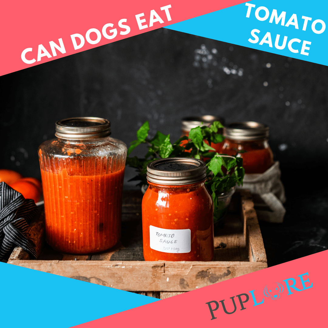 Can Dogs Have Tomato Sauce? - Puplore