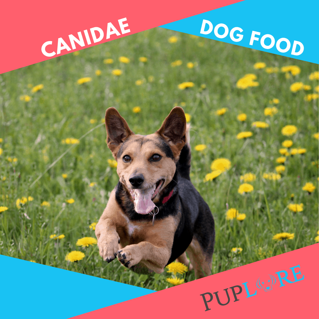 Canidae Dog Food Review - Puplore