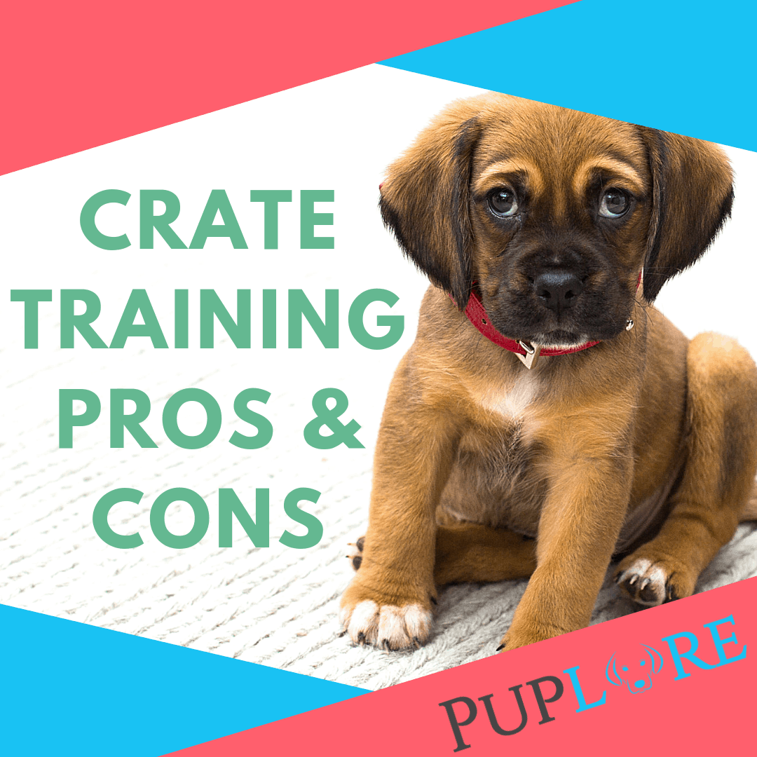 Crate Training Pros and Cons for Your Dog - Puplore