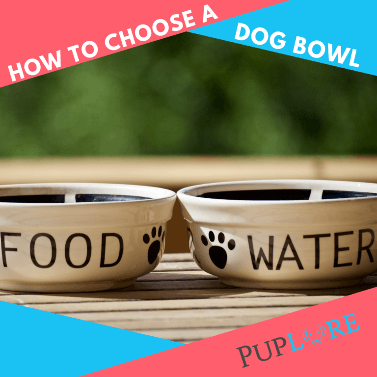 A Guide to Choose and Clean the Best Dog Food Bowls