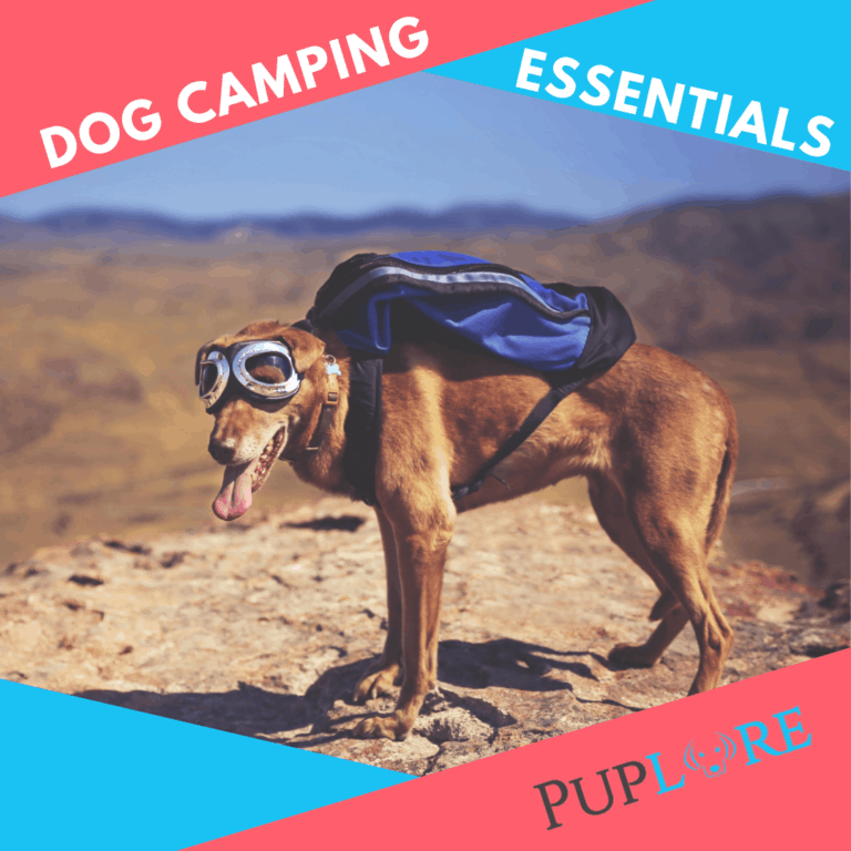 10 Dog Camping Essentials You Must Have