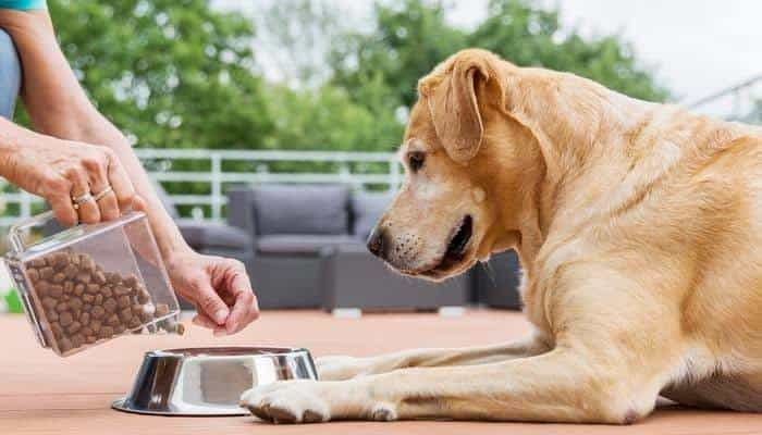 How to Choose and Clean Dog Food Bowls