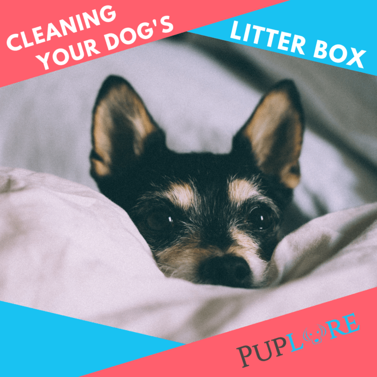 How to Clean Your Dog's Litter Box Like a Pro