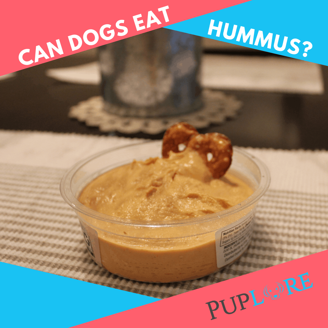 Is Hummus Harmful to Dogs? - Puplore Dog Care Tips