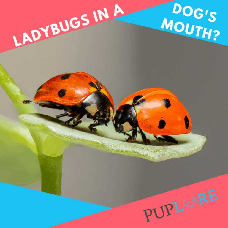 What To Do If You Find Ladybugs in Your Dog's Mouth