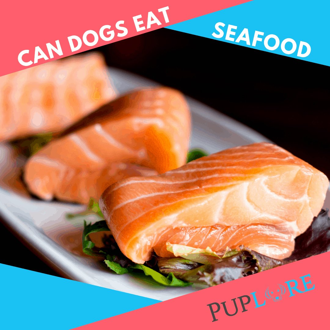 Seafood Dogs CAN Eat - Puplore.com