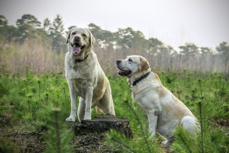 When Do Labs Stop Growing? - Puplore